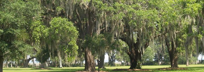 St. Simons Island With live oaks dripping with Spanish moss, Fort Frederica on St. Simons Island offers a great glimpse into colonial history -- as well as outstanding beaches and fun. Credit:  AndyBrack, copyright 2012.  All rights reserved.